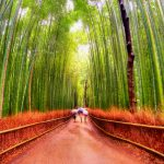 Luke Zeme Photography Bamboo-Forrest-150x150 PHOTO OF THE DAY- Fushimi Inari Shrine, Japan