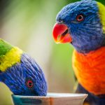 Luke Zeme Photography Lorikeets1-150x150 PHOTO OF THE DAY- Luminescence, Tokyo HDR
