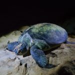 Luke Zeme Photography Turtle-Island-150x150 PHOTO OF THE DAY- The Bat Caves