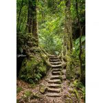dreamy-stone-staircase-in-a-rainforest-australia-hdr-landscape-photography